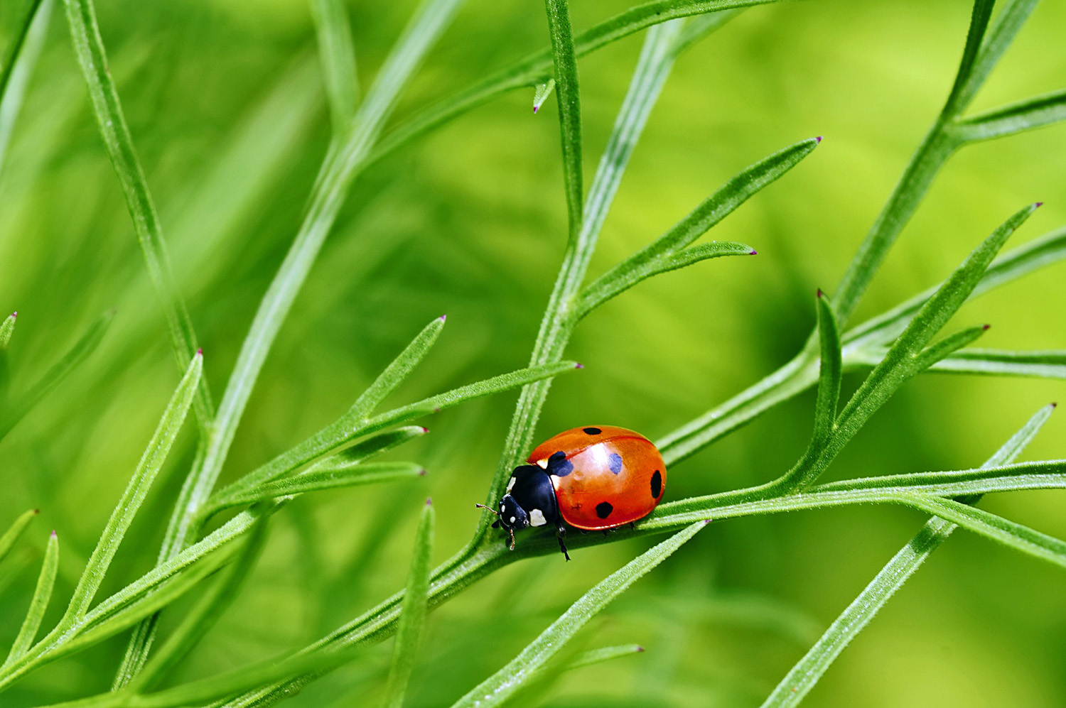 Insects that look like ladybugs
