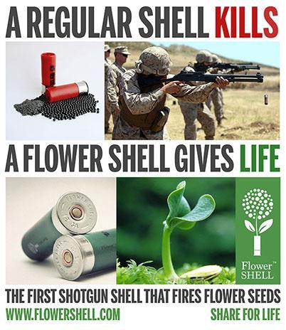 flower-shells3
