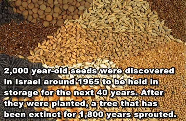 interesting_and_unusual_facts_640_15