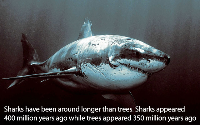 fascinating_facts_10